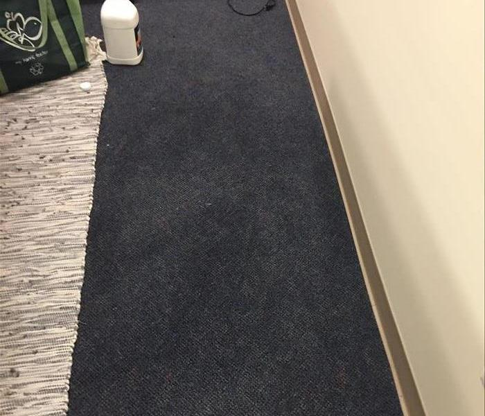 Mold On Carpeting After